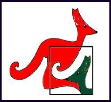 kangaurou
